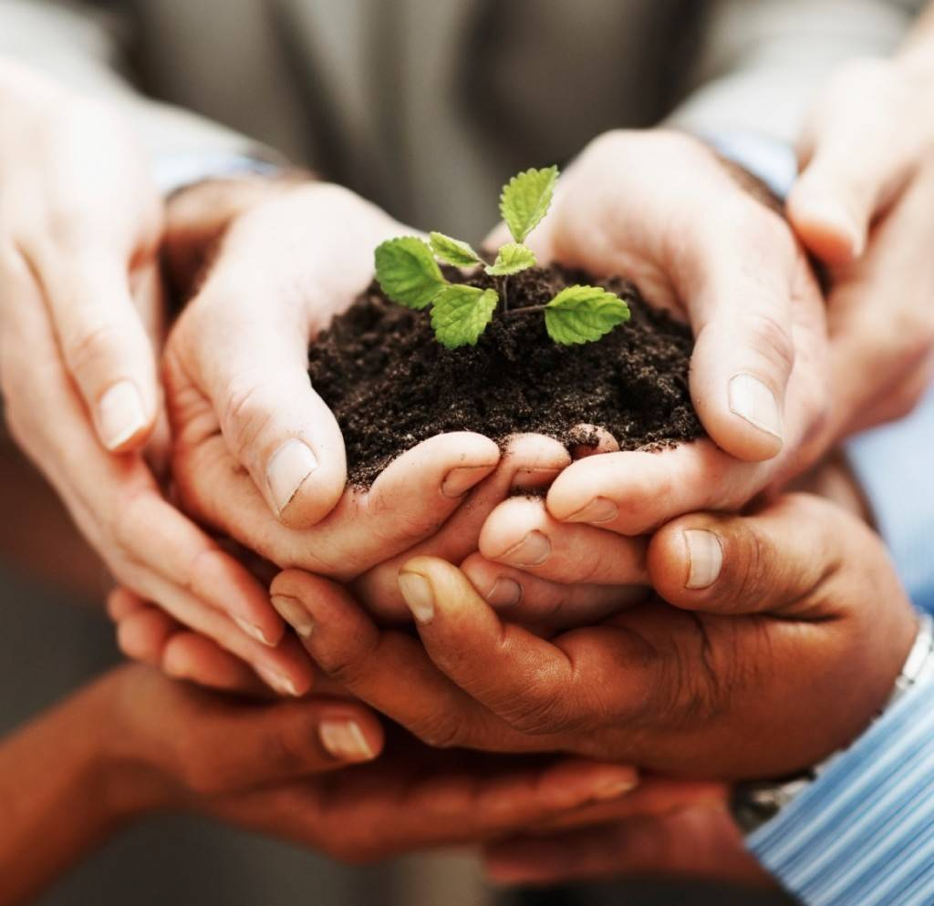 Business growth - Closeup of hands holding green plant indicating teamwork